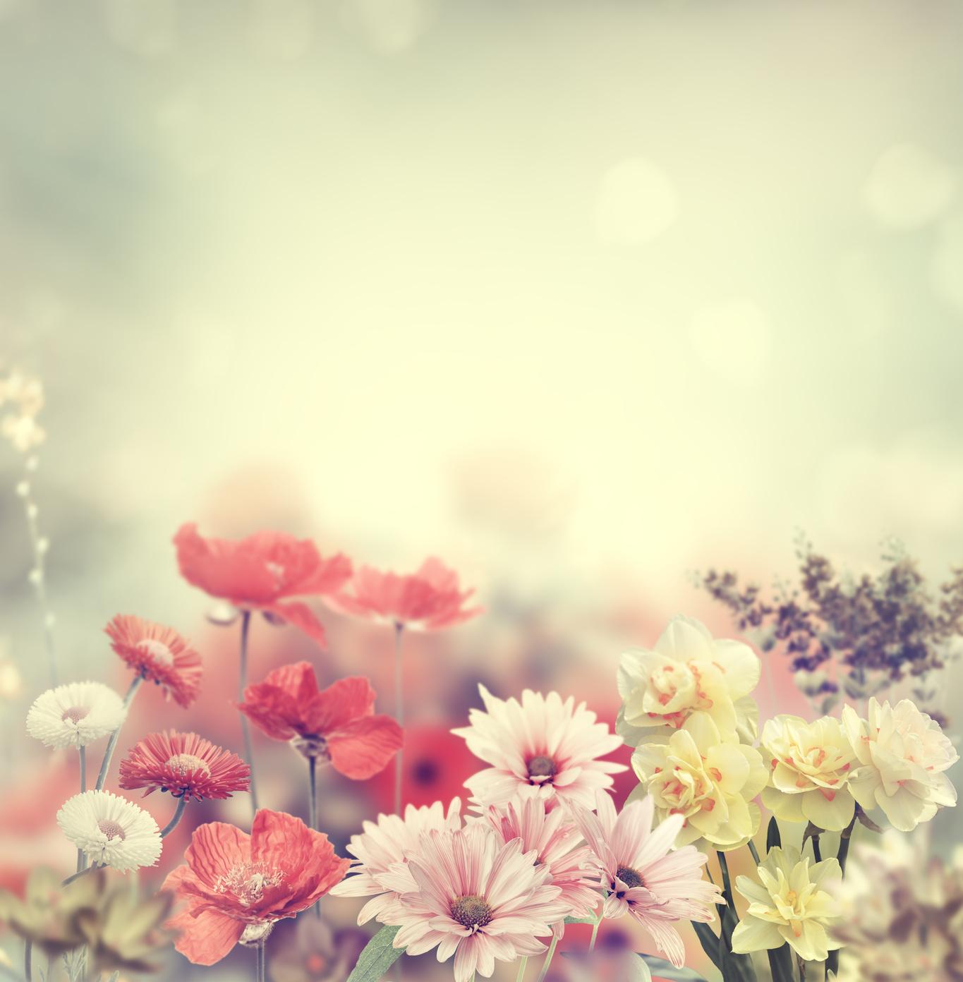 wunderbar und frische Blumen zu ermäßigten Preisen mit Floraprima Gutscheincodes