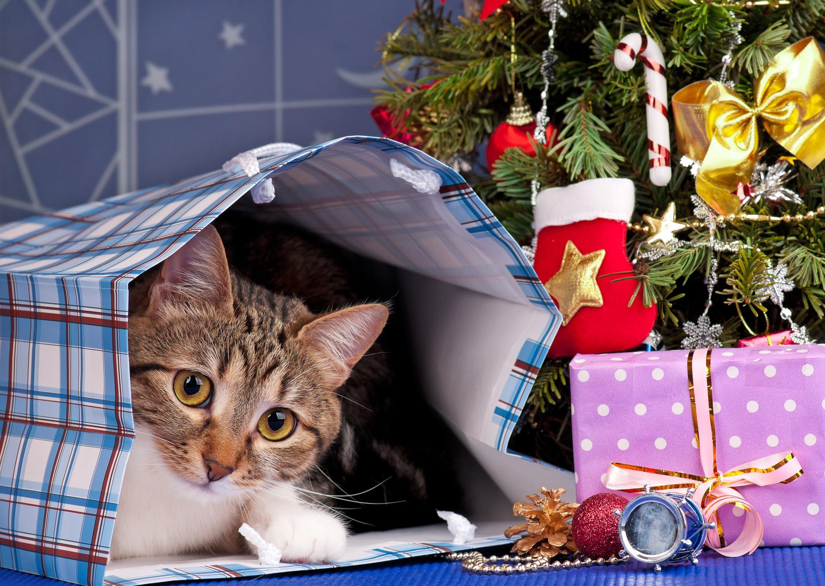 Caring für Ihr Katzen- Verwöhn sie mit diesen Accessoires!